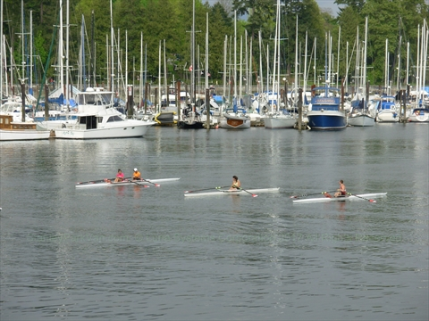 Rowing in Coal Harbour at Stanley Park, Vancouver, B.C., Canada