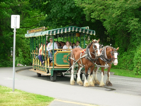 Horse-drawn Tour of Stanley Park, Vancouver, British Columbia Canada