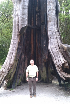Hollow Tree in Stanley Park, Vancouver, B.C., Canada