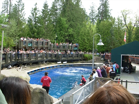 Dolphin Show at the Vancouver Aquarium in Stanley Park, Vancouver, B.C., Canada