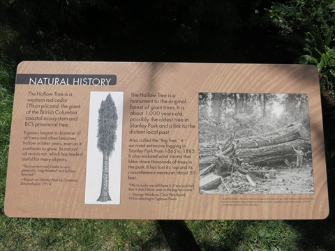 Hollow Tree plaque in Stanley Park, Vancouver, BC, Canada