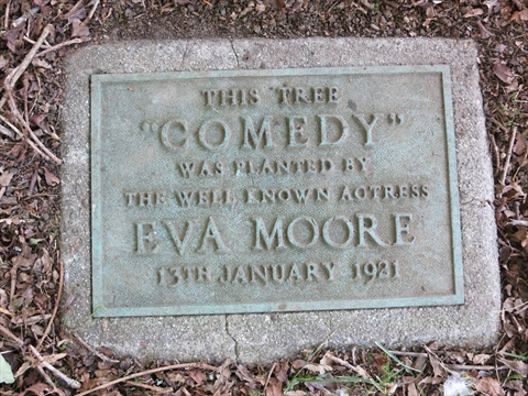 Comedy Tree Plaque in Stanley Park