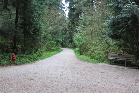Bridle Trail in Stanley Park, Vancouver, BC, Canada