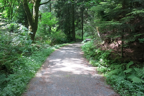Thompson Trail in Stanley Park